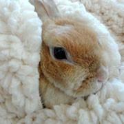毛布に包まれるうさぎ