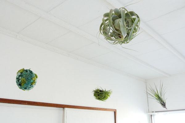 天井から吊るされている植物