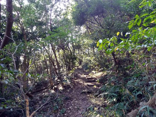 森の中の自然歩道